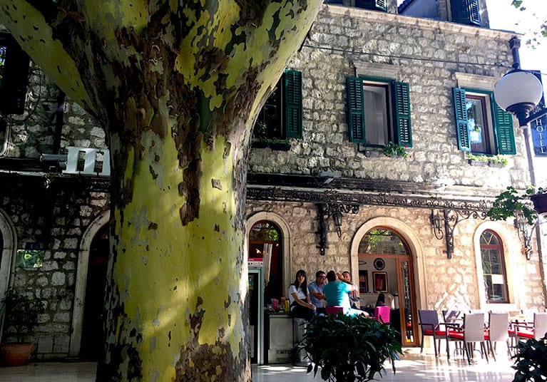 100 year old Platani trees in the squar-Trebinje