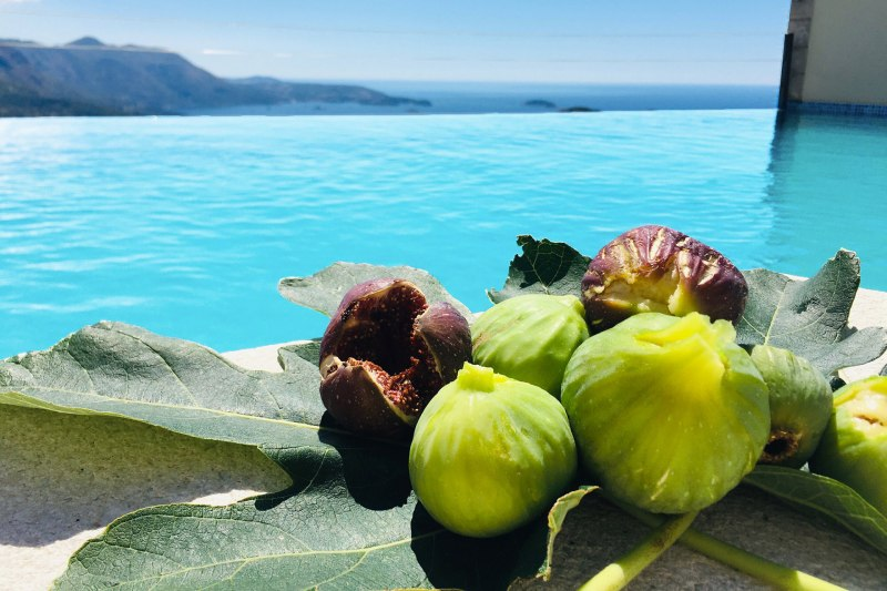 Luxury Apartment Goja-Figs from the tree in Apartment Goja